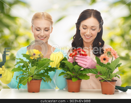 housewife with flower in pot and gardening set stock photo, two housewives with flower in pot and gardening set by Syda Productions