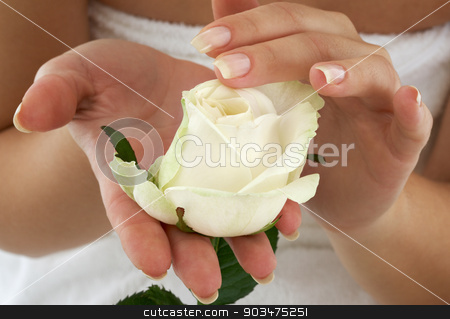 rosebud stock photo, beautiful woman hands with rosebud by Syda Productions