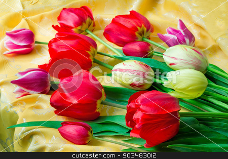 Bright red tulip against yellow silk stock photo, One big beautiful tulip of bright red color against the beautiful draped yellow silk. It is presented by a close up by Georgina198