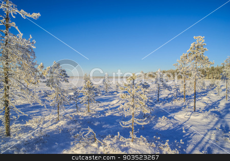 Snow-covered trees stock photo, Picturesque view of trees of all sizes covered in snow in a winter country              by Michal Knitl