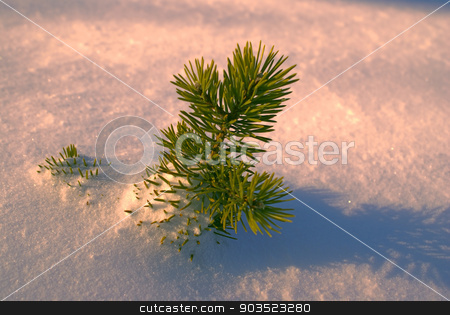 Branch in the snow stock photo, Picturesque view of a solitary little branch peeking out of snow in the setting sun by Michal Knitl