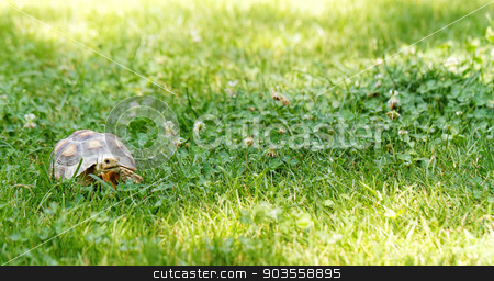 Little turtle stock photo, Little cute turtle in the green garss by Nneirda