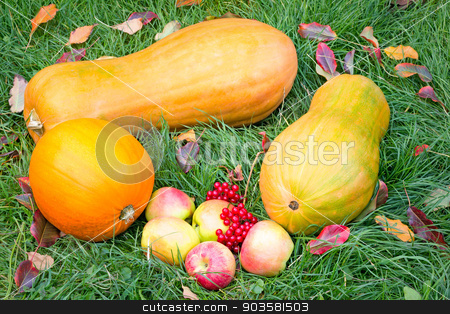 Pumpkins, apples and berries on the green grass. stock photo, On the green grass lay three large ripe pumpkin, ripe apples and red berries. by Georgina198