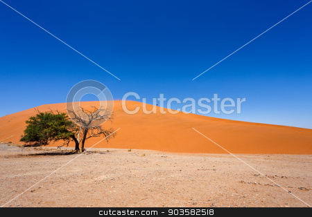 Dune 45 in sossusvlei Namibia with green tree stock photo, Dune 45 in sossusvlei Namibia with green tree, best of Namibia landscape by Artush