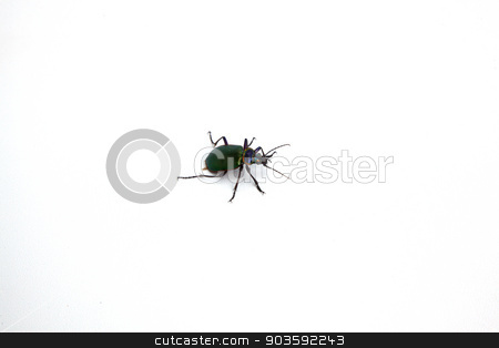Beetle stock photo, A beetle isolated on a white background. by Scott Sanders