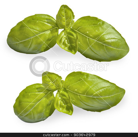 Fresh basil  stock photo, Fresh basil. Isolated on white background by Juha Eronen