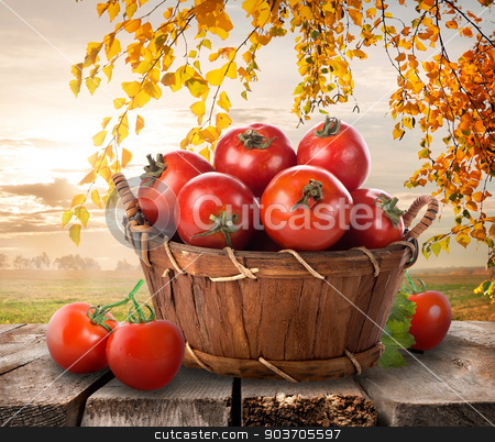 Ripe tomatoes stock photo, Ripe tomatoes in a basket on a nature background  by Givaga