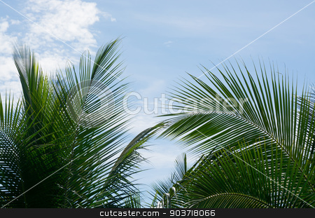 Green coconut palm tree leaves stock photo, Green coconut palm tree leaves closeup on blue sky, Southern Province, Sri Lanka, Asia. by ArtesiaWells
