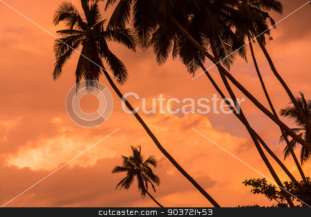 Palm Silhouettes stock photo, Palm silhouettes on cloudy warm orange skies, Sri Lanka, Asia in December. by ArtesiaWells