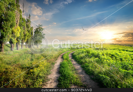 Poplars near country road stock photo, Poplars near country road at the light of morning sun by Givaga