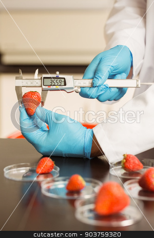 Food scientist measuring a strawberry stock photo, Food scientist measuring a strawberry at the university by Wavebreak Media