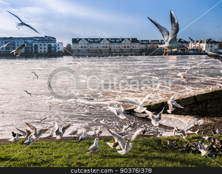 Seagulls over river ,Athlone dam in background stock photo, Seagulls over river in Athlone dam in background, ireland by Viktor