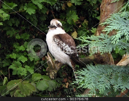 bird stock photo, bird in an aviary in a zoo by Saphire Ovadia