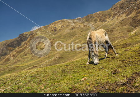 Horse in Himalayas stock photo, Horse grazing in scenic nepalese countryside by Michal Knitl