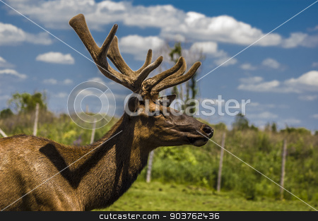 Deer stock photo, close-up view of a deer in its captive habitat by Vlad Podkhlebnik