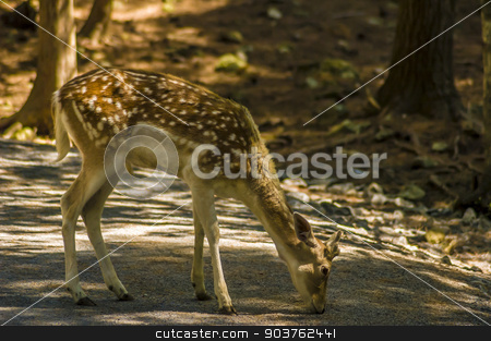 Deer stock photo, close-up view of a deer in its natural habitat by Vlad Podkhlebnik