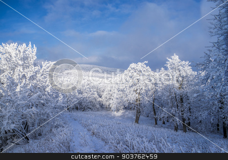 Winter stock photo, Picturesque white winter in forests of Slovakia by Michal Knitl