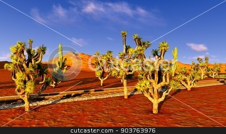 Joshua trees and railroad stock photo, Joshua trees growing along old railway by Dariusz Miszkiel
