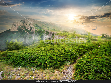Juniper in mountains stock photo, Meadow of green juniper in mountains at sunrise by Givaga