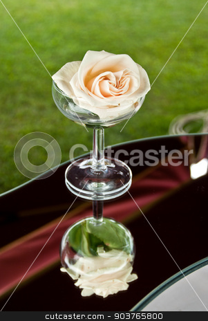 a white rose in champagne glass stock photo, a white rose dipped in a champagne glass in the mirror of love by Piermichele Malucchi