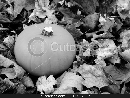 Ripe pumpkin among dry autumn leaves stock photo, Ripe pumpkin among dry fall leaves - monochrome processing by Sarah Marchant