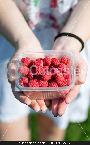 Hands holding raspberries stock photo, in female hands lay a bunch of ripe delicious fresh raspberries by Pavel Starikov