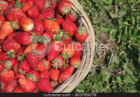Strawberry in basket stock photo, Close Up Of A Pile Of Strawberry in a basket by Minh Tang