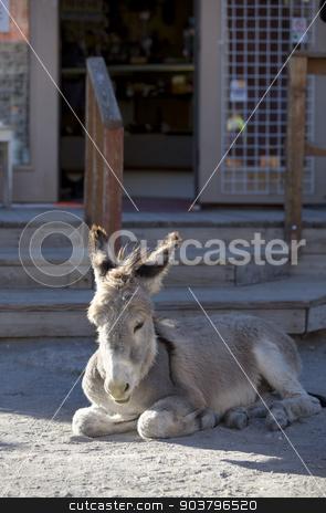 Baby Burro Resting on Street stock photo, Wild Baby Burro resting in front of store in Oatman Arizona USA by Scott Griessel