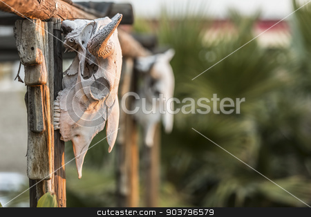 Two Cow Skulls on Porch stock photo, Cow skuls hanging on beams with deep focus by Scott Griessel