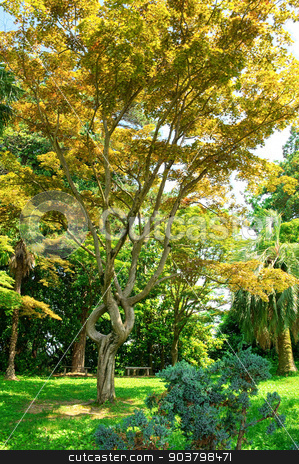 Spring park natural landscape stock photo, Spring park natural landscape. Batumi Botanical Park, Georgia by MaStudio