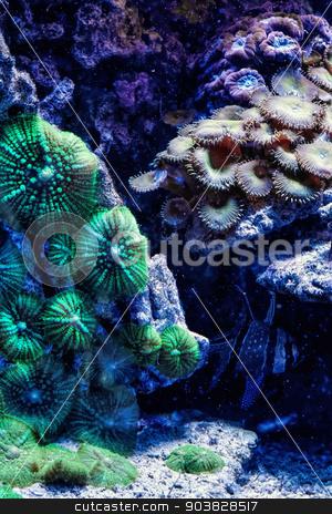 Underwater paradise stock photo, Underwater paradise with colorful fish by Dariusz Miszkiel