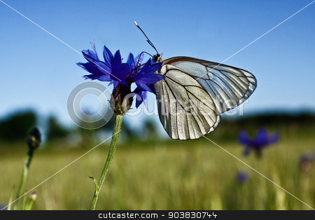 White butterfly on blue flower stock photo, White butterfly on blue flower by everelative