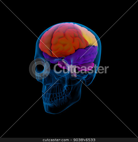Colored sections of a human brain-cerebrum stock photo, Colored sections of a  human brain-cerebrum - side view by maya2008