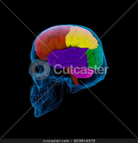Colored sections of a  human brain-cerebrum stock photo, Colored sections of a  human brain-cerebrum - sdie view by maya2008