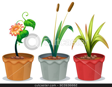 Potted Plants stock vector clipart, Illustration of three potted plants by Matthew Cole