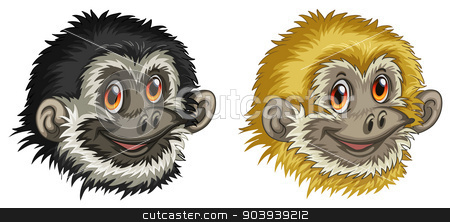 Gibbon faces stock vector clipart, Illustration of two gibbon faces by Matthew Cole