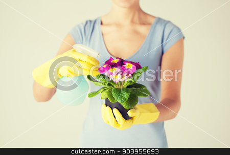 woman holding pot with flower and spray bottle stock photo, close up of woman holding pot with flower and spray bottle by Syda Productions