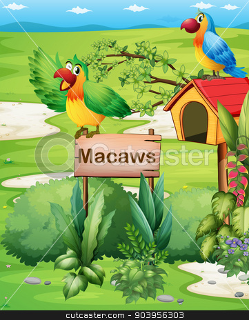 Two colorful parrots above a signboard and a pethouse stock vector clipart, Illustration of the two colorful parrots above a signboard and a pethouse by Matthew Cole