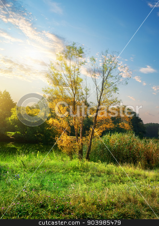 Wild nature stock photo, Trees on a meadow with flowers at sunrise by Givaga