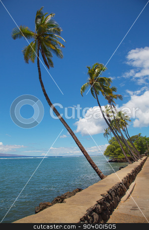 Lahaina Palm Trees stock photo, Palm trees along Front Street in Lahaina by Scott Griessel