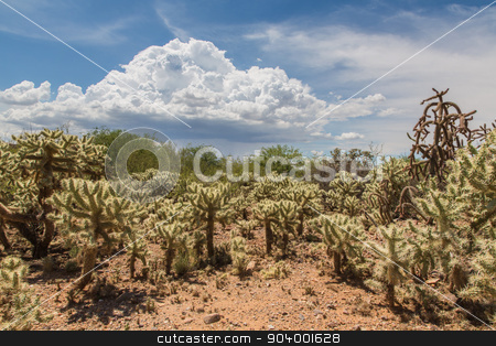 Cactus Shrubs in Wilderness stock photo, Desert wilderness with cactus plants in Arizona by Scott Griessel