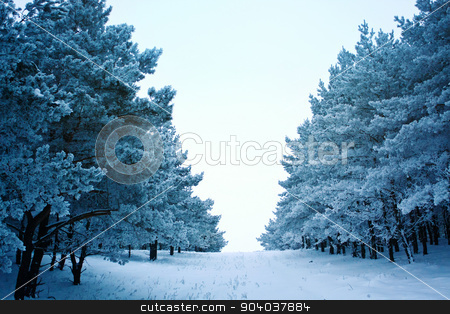 winter road in the forest  stock photo, winter road in the forest with snow by serkucher