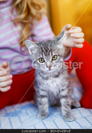 gray pussy with little girl stock photo, lovely gray pussy kitten is interesting by serkucher
