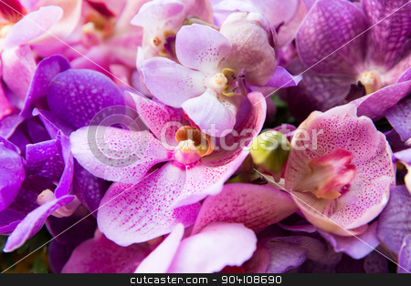 beautiful orchid flowers stock photo, gardening, botany, texture and flora concept - beautiful orchid flowers by Syda Productions