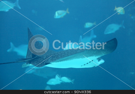 Stingray stock photo, A stingray swimming through the water with fish behind by Lucy Clark