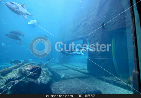 Manta Ray stock photo, A manta ray swimming through the water by Lucy Clark