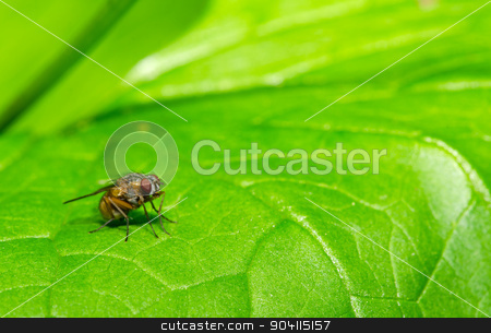 Fly on the leaf stock photo, Fly on the green leaf, blurred background. by richpav