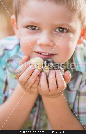 Child With Baby Chickens stock photo, Happy boy child holds his pet chicks by Scott Griessel