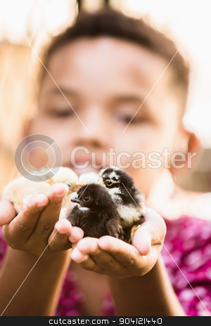 Single Girl Holding Three Chicks stock photo, Smiling girl holding trio of baby chickens by Scott Griessel