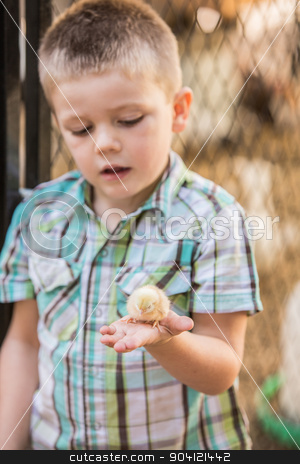 Interested Child with Baby Bird stock photo, Curious boy holding a yellow baby chicken by Scott Griessel
